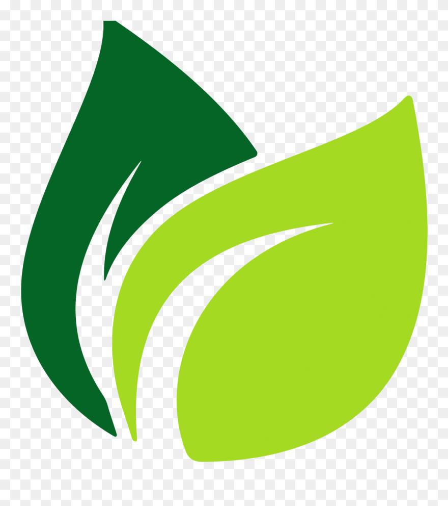 Leaves Clipart Green Tea Leaf Leaves Green Tea Leaf Green Leaf Png Vector Transparent Png 4998359 Pinclipart