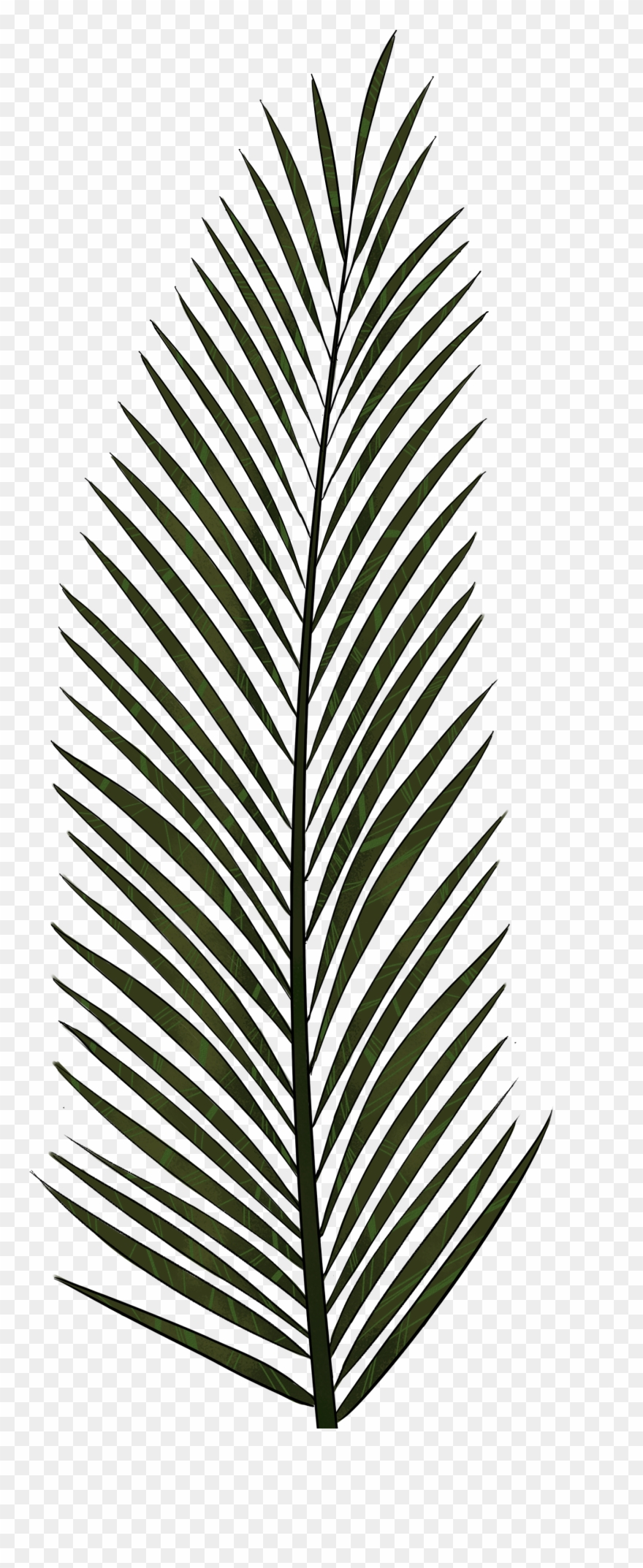 Palm Leaves Palm Tree Leaf Texture Clipart 514164 Pinclipart Available in vector, svg, png, dxf & pdf files. palm leaves palm tree leaf texture