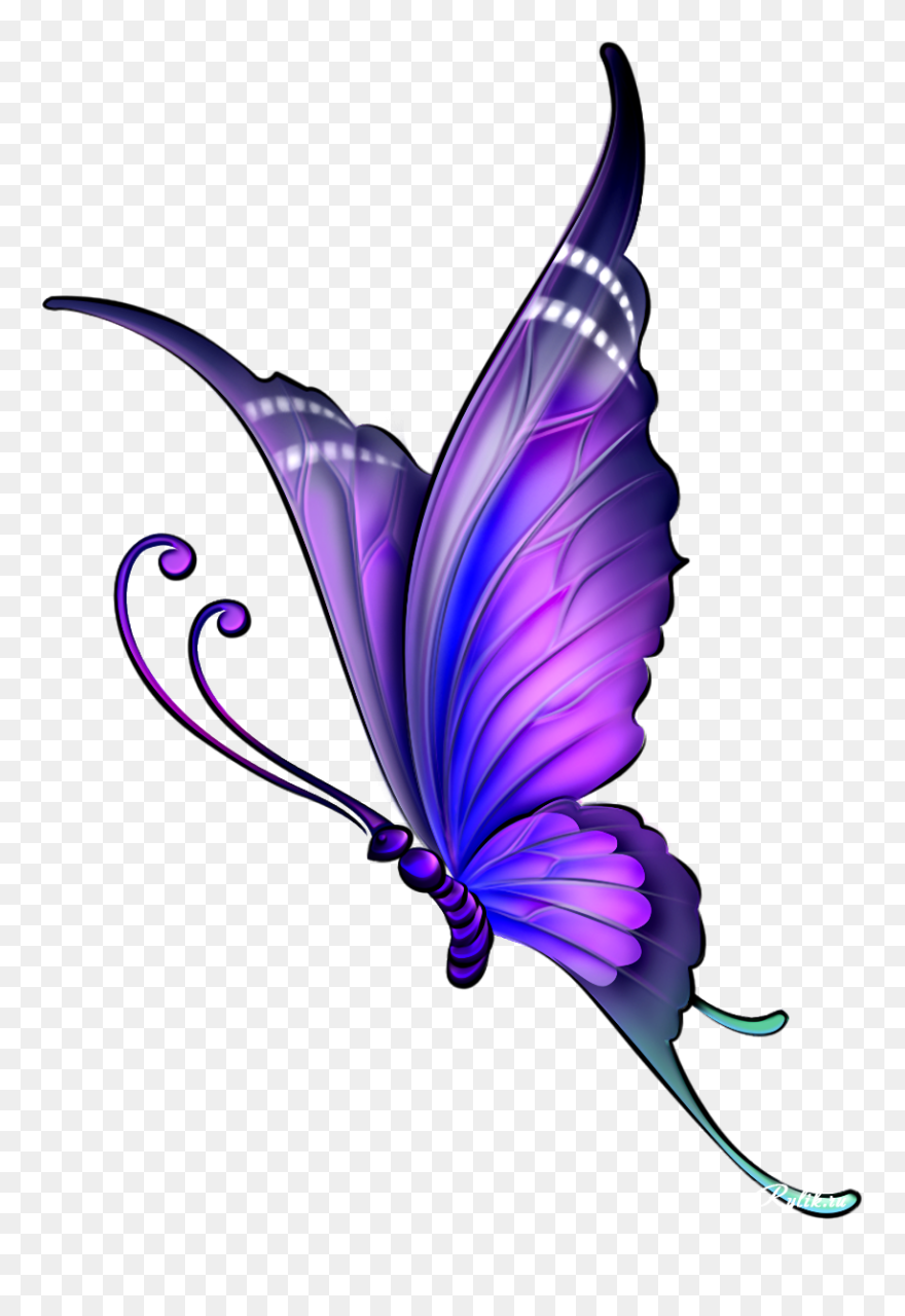 Butterfly Drawing Color Clip Art Butterfly Drawing With Colour Png Download 5266486 Pinclipart