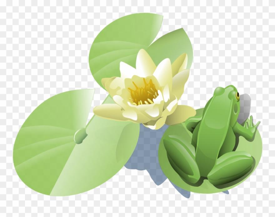 Onlinelabels Clip Art - Lily Pad Clip Art - Png Download