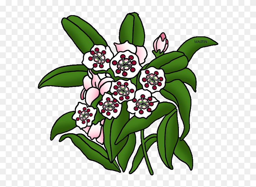 State Flower Of Connecticut Clipart 5332896 Pinclipart