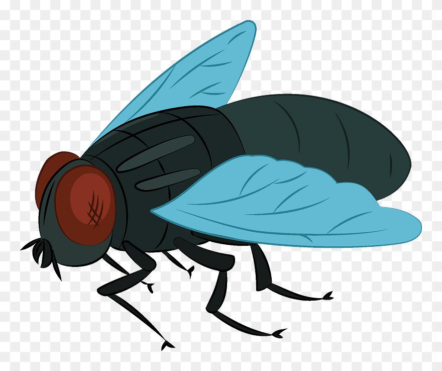 House Fly Clipart