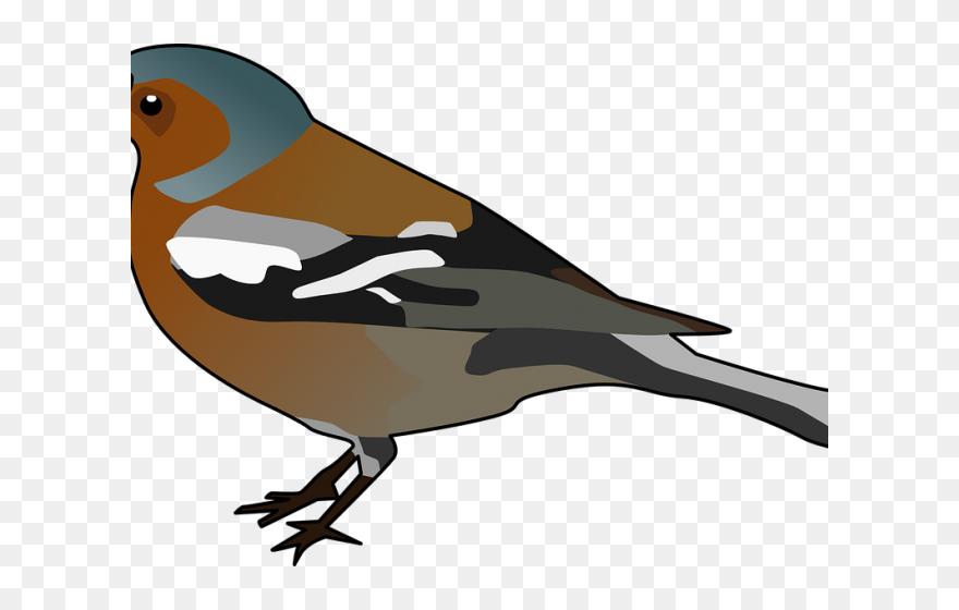 st louis cardinals mascot - Clip Art Library