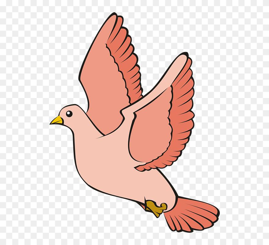 Transparent Pigeon Clipart Gambar Merpati Kartun Png Download Full Size Clipart 5578047 Pinclipart