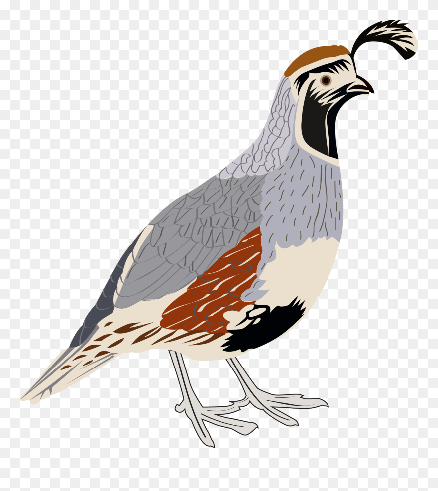 Quail Flying Images, Stock Photos & Vectors   Shutterstock