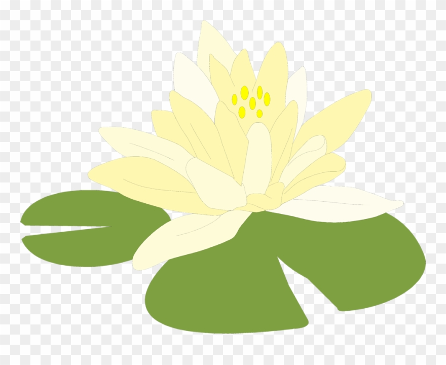 Free Clipart Transparent Background, Free Free Clipart - Green Lily Pad Clipart Png