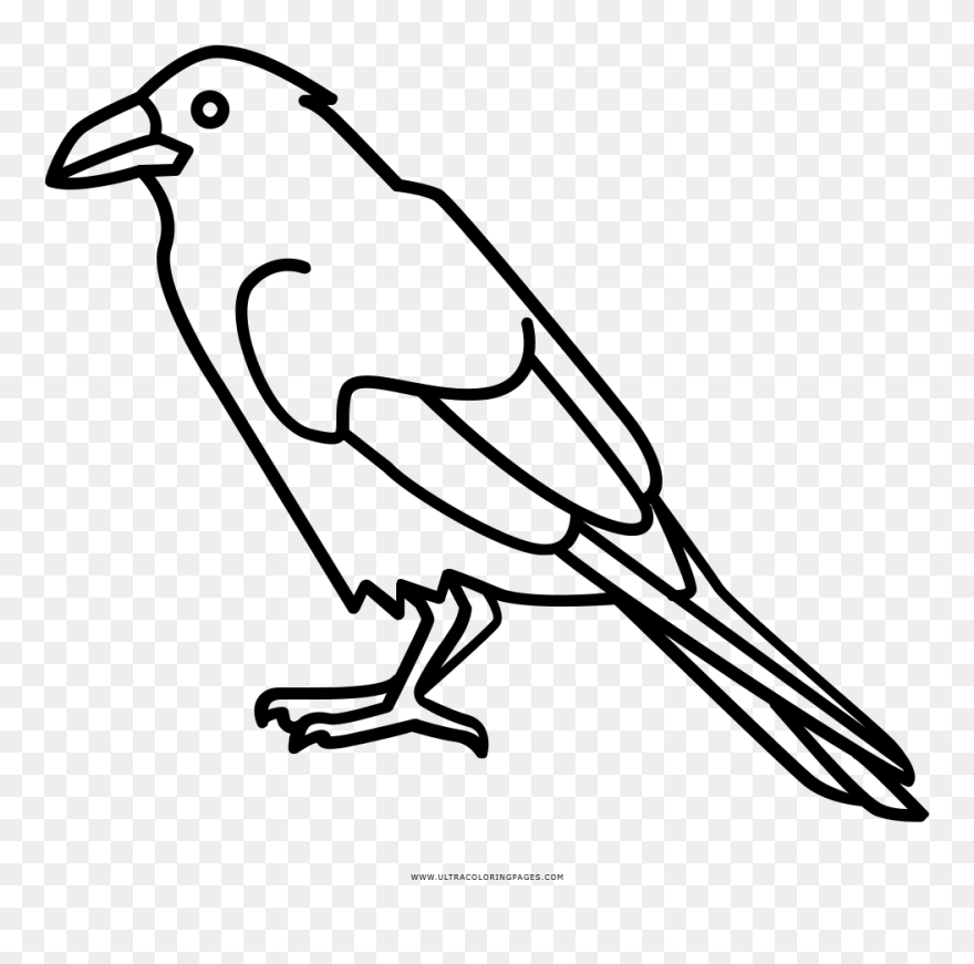 Raven Coloring Page تلوين غراب Clipart 5627244 Pinclipart