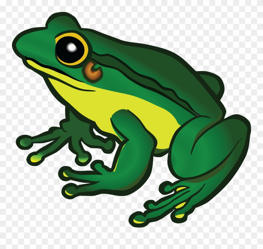 Frog realistic. Free clipart of