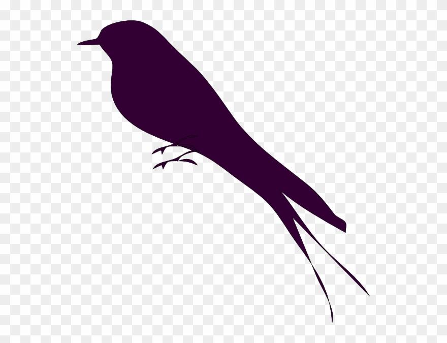 Bird small. Mockingbird on a branch