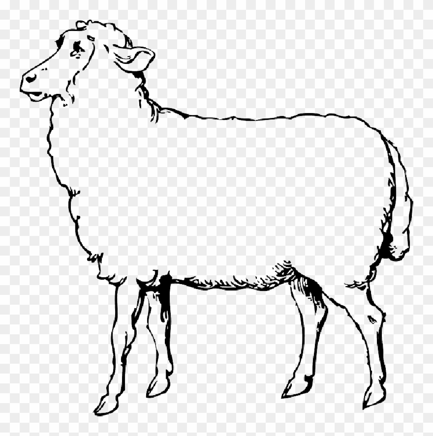 Animals Black Food Outline Drawing Sketch White Sheep