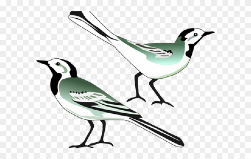 Mockingbird Clipart Burung Klip Art Burung Png Download 646687