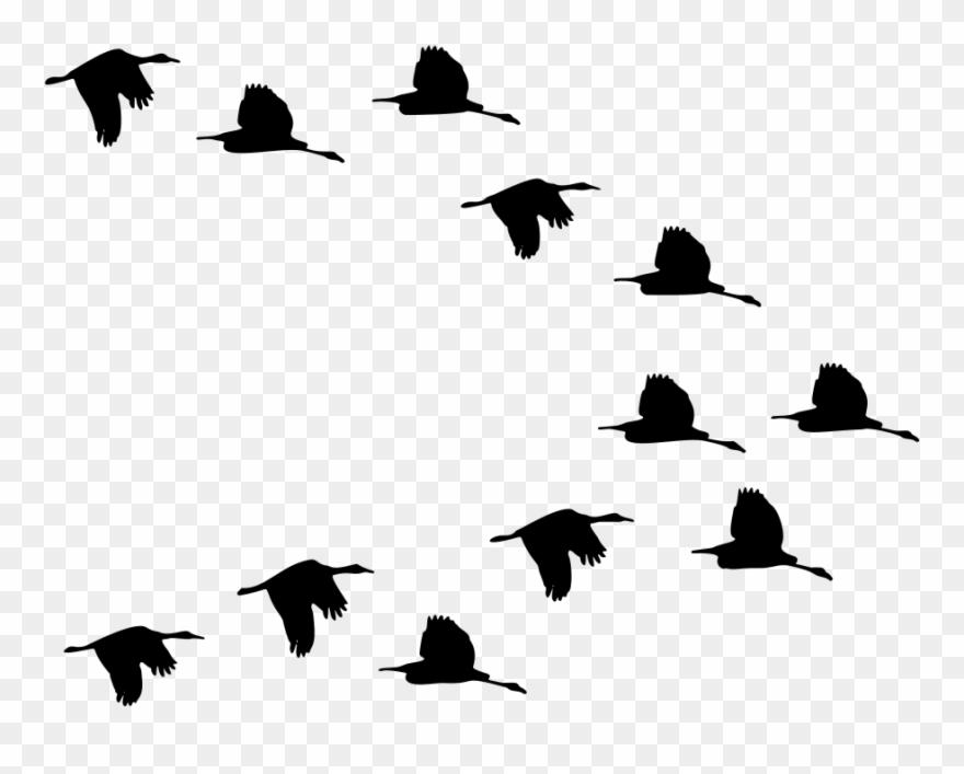 Onlinelabels Clip Art - Flying Birds - Png Download (#660482
