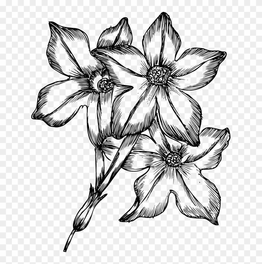 drawings of flowers - 920×800