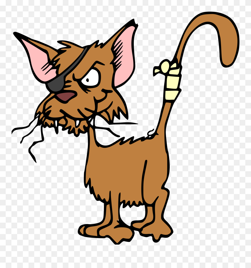 Cat, Animal, Injured, Hurt, Fighting, Patch, Pet - One ...