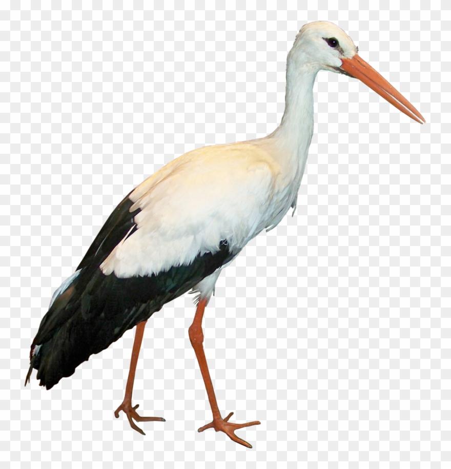Crane Clipart Stork Bird - Stork Png Transparent Png