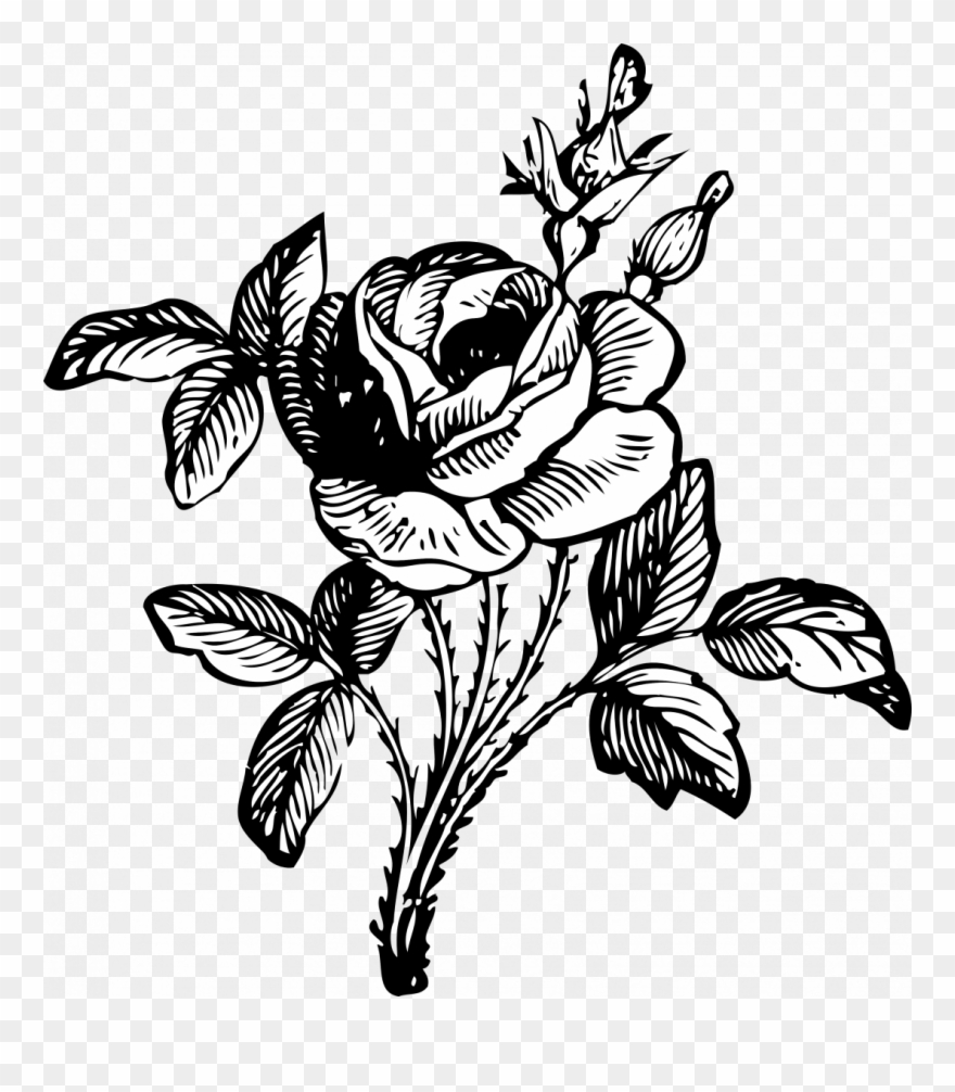 How To Draw A Simple Rose Bush Bunch Of Flowers Flower Bouquet