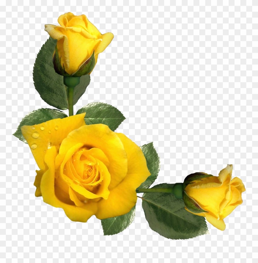 Yellow Roses Clipart - Yellow Rose Border Clipart - Png Download