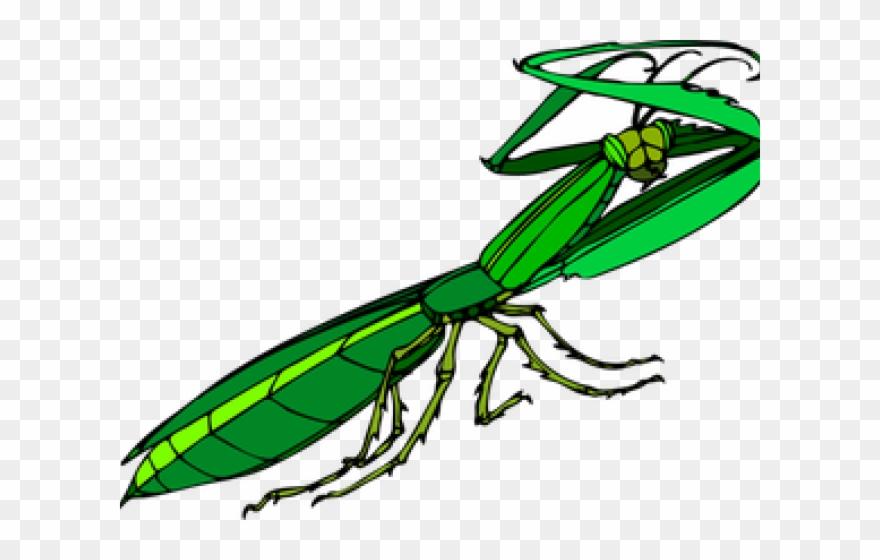 Praying Mantis Clipart Pray Mantis Gottesanbeterin Clipart Png