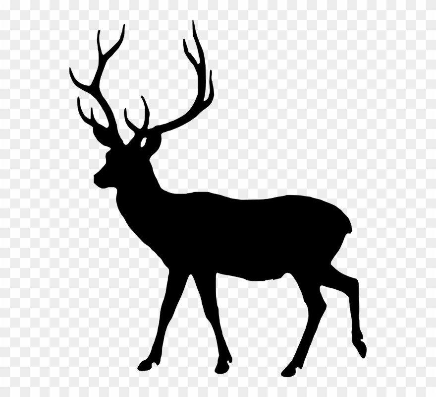 Free Photo Animal Silhouette Fallow Deer Male Wild Silhouette Of Animals Clipart 875017 Pinclipart