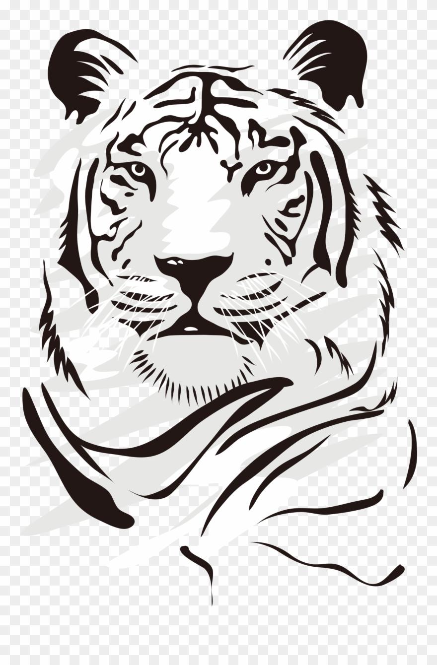 Drawing Tigers Vector - Dibujos De Tigres Blanco Y Negro ...