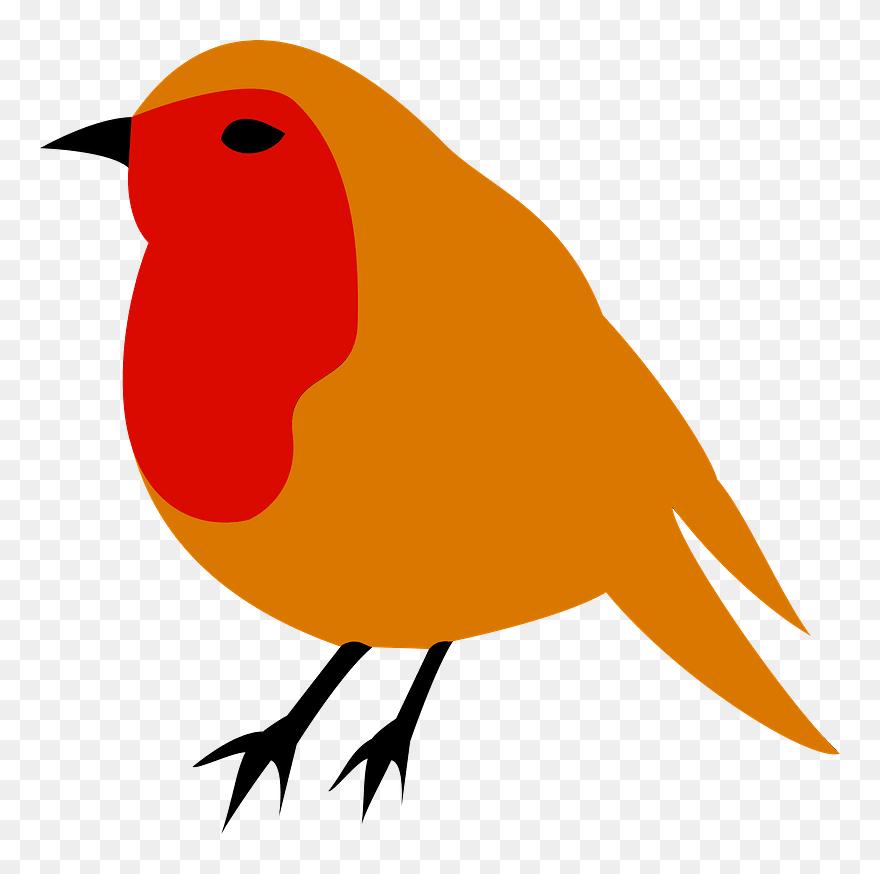 Bird robin. European american drawing clip