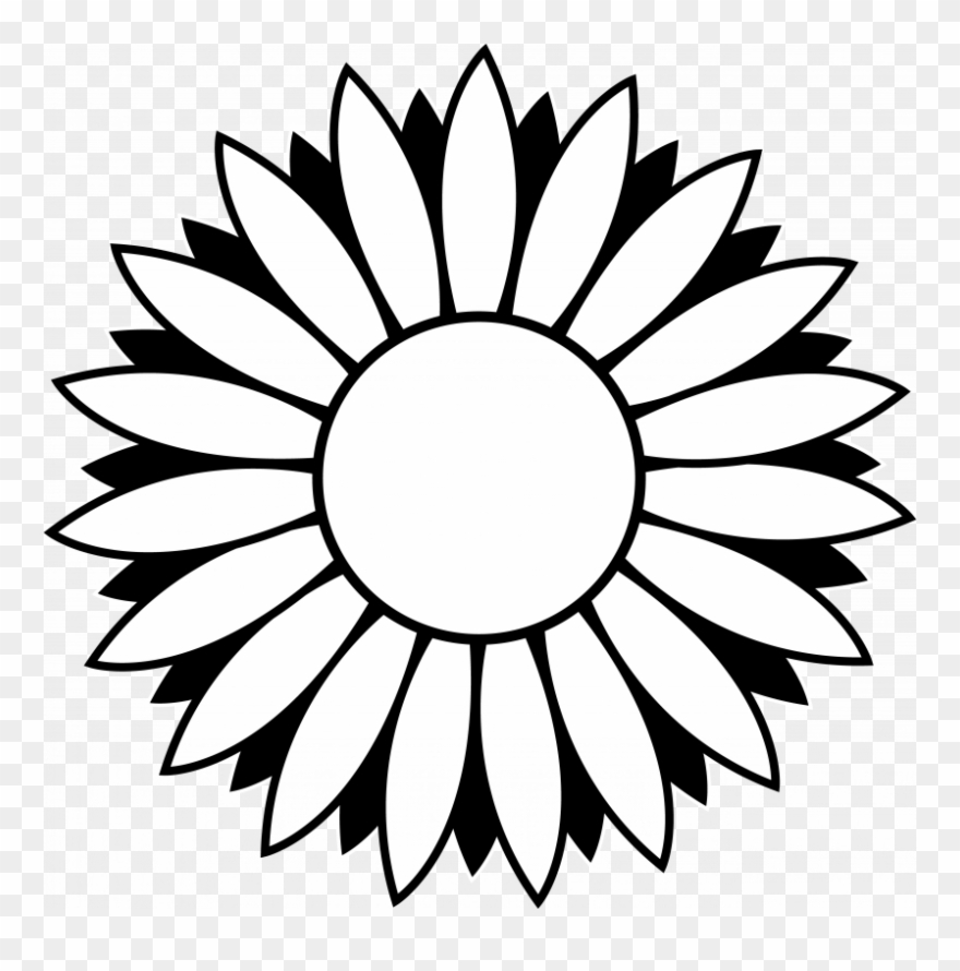Flower black and white sunflower. Sunflowers clip art png