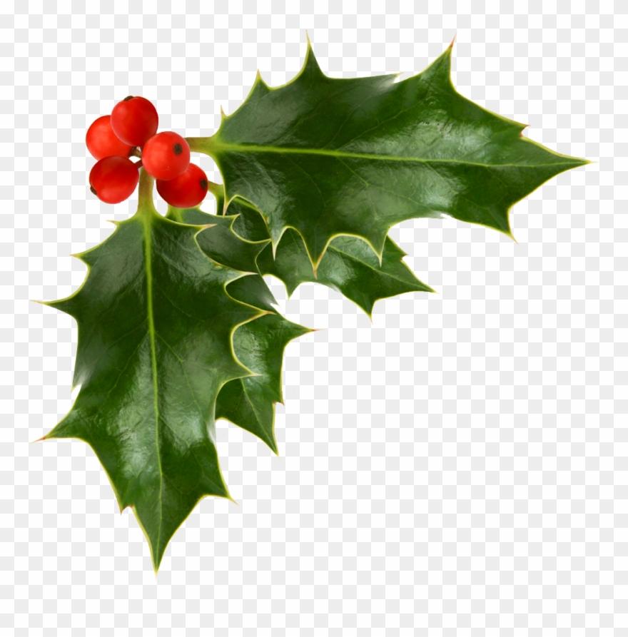 Last Christmas I Gayview Mahat.Christmas Holly Christmas Holly Last Christmas I Gayview