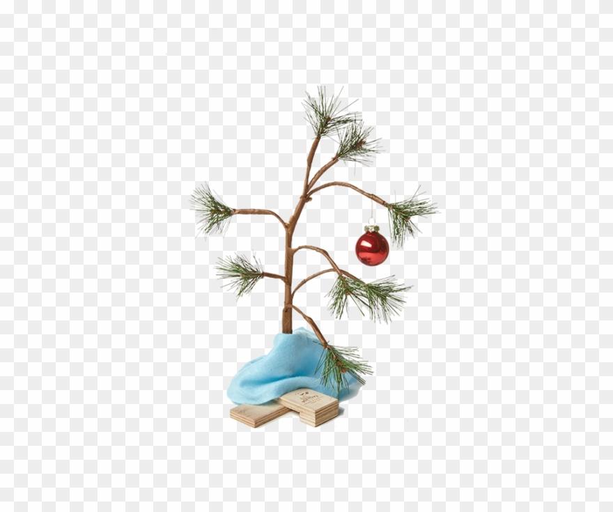 Charlie Brown Christmas Tree Image.Charlie Brown Christmas Tree Png Transparent Charlie Brown