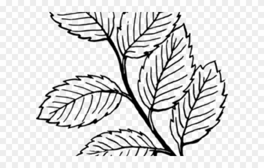 Leaves Clip Art Black and White